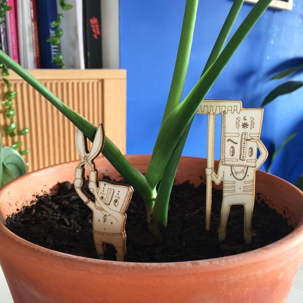 chamans des plantes en pot chakoup et suriman